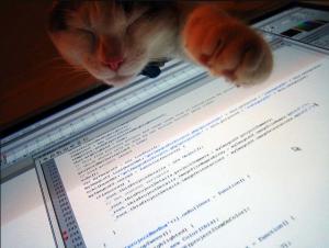 Computer cat | Steve Caddy